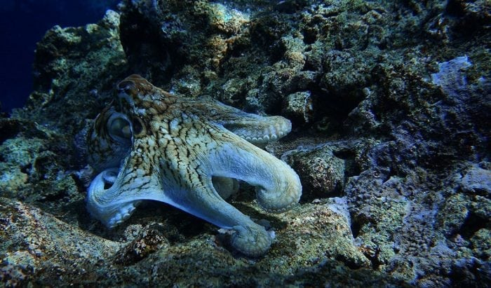 octopus Credit: Public Domain Pictures