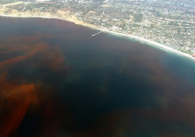 """A red tide off the coast of San Diego, California"" by Alejandro Díaz is licensed under the Public Domain"