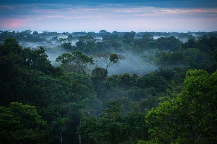Brazilian Amazon Rainforest (Credit: Wikimedia Commons)