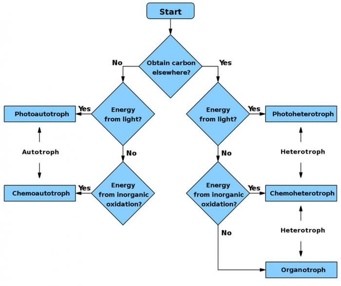 Autotrophs Vs Heterotrophs Venn Diagram - Trusted Wiring Diagrams •