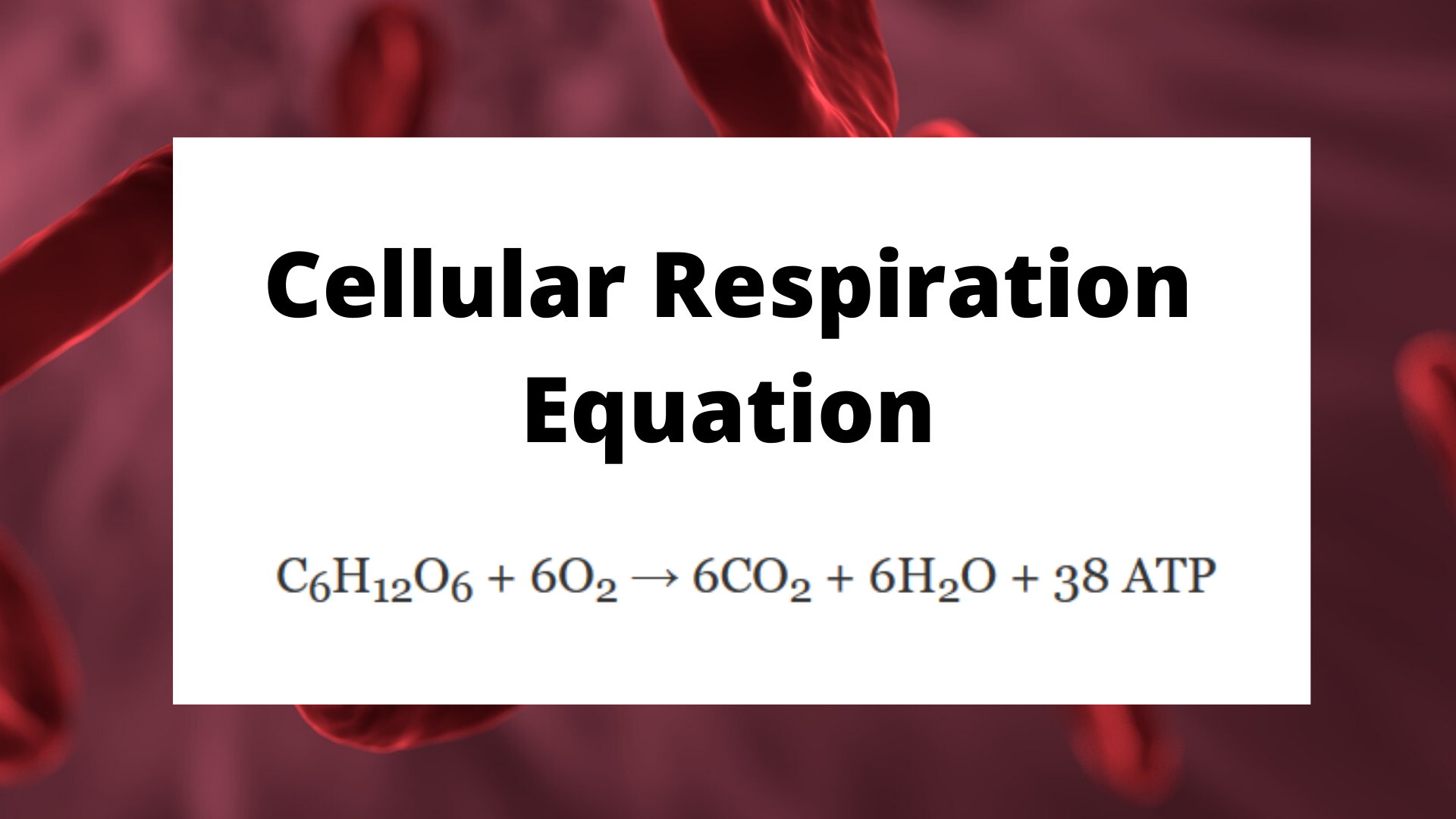 Balanced Chemical Equation For Cellular Respiration Meaning And Function Science Trends