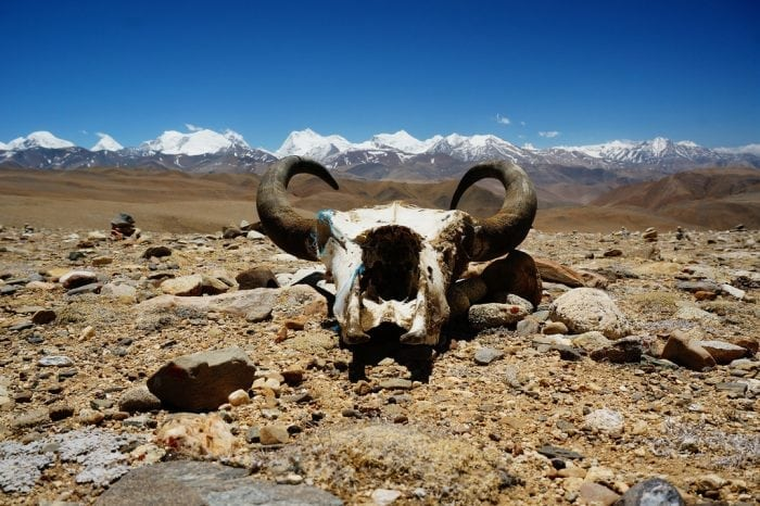 """Skull in front of Tibetan Plateau"" by Andrew and Annemarie (via Flickr) is licensed under CC BY-SA 2.0"