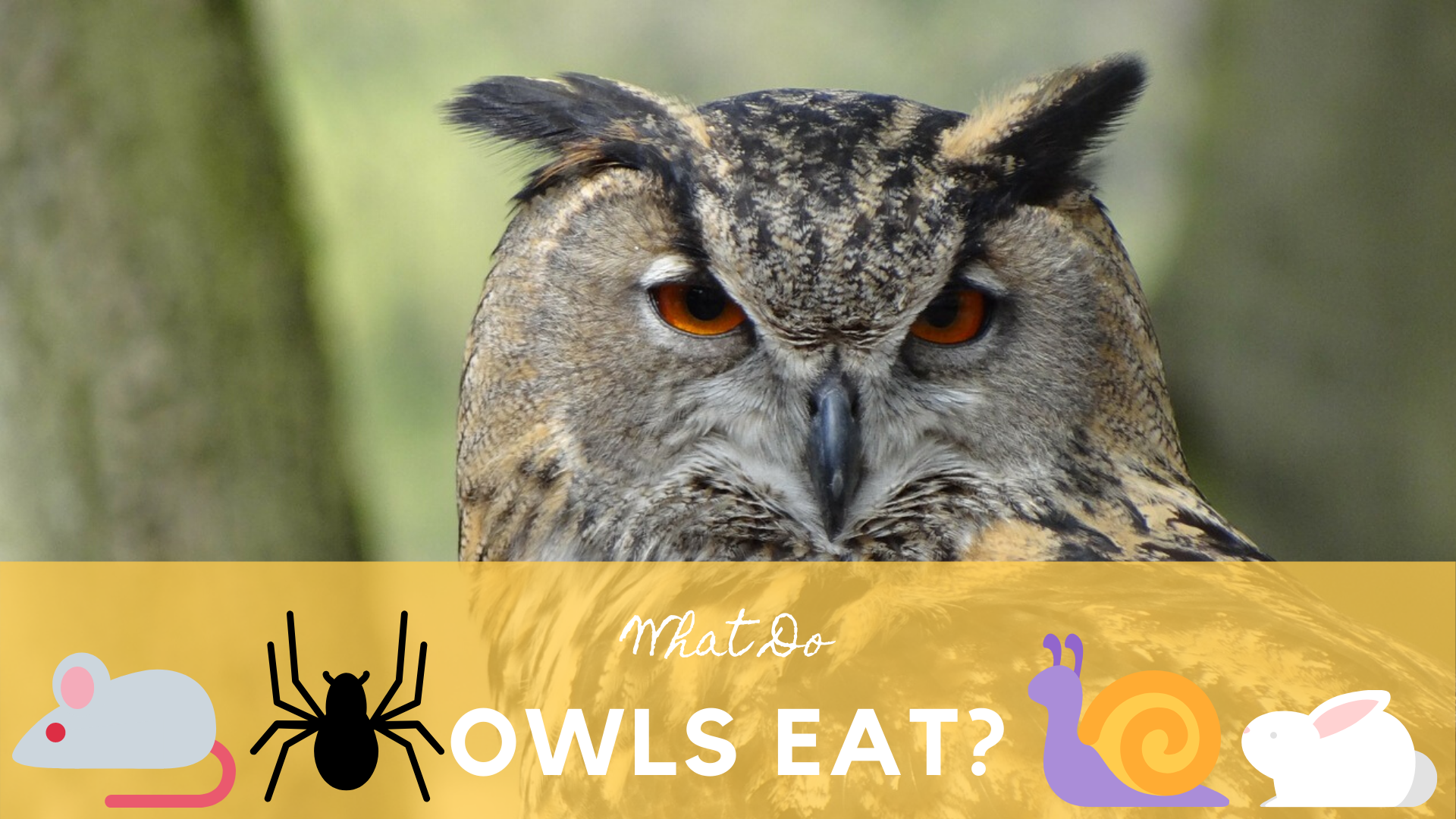 What Do Owls Eat? | Science Trends