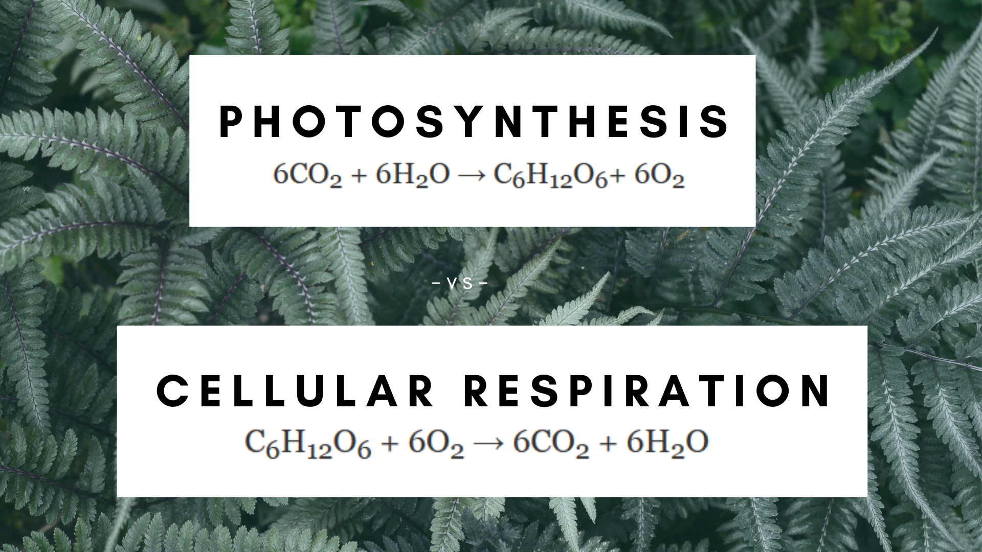 What Are The Reactants Of Photosynthesis And Cellular Respiration Science Trends