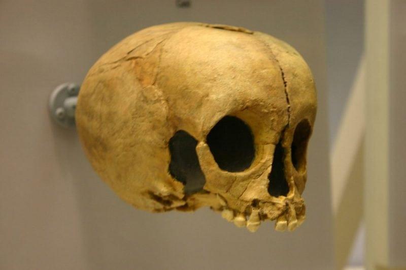 Homo neanderthalensis child skull (Wikipedia.org)