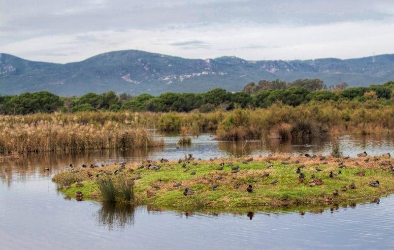 Remolar freshwater pond (Credit: Wikipedia)