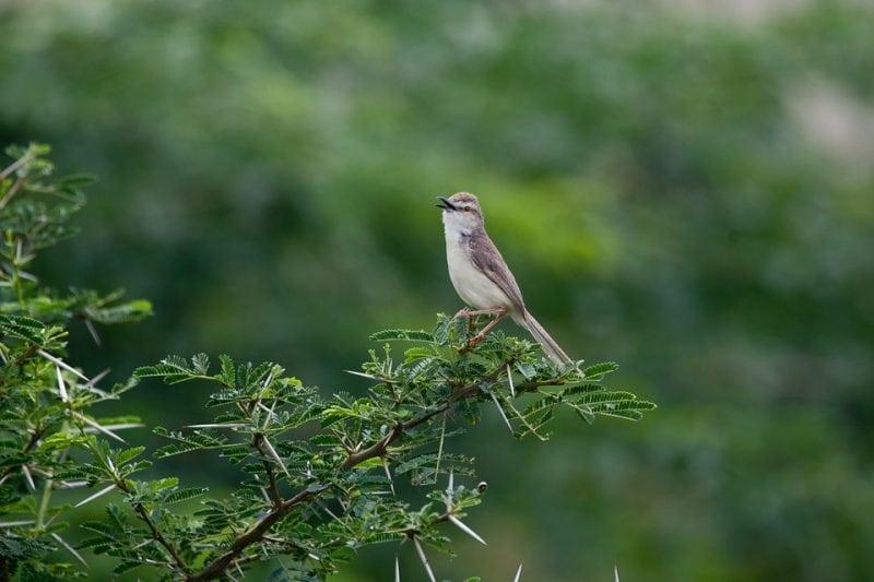 Flora and fauna refer to plants and animals. Photo: sbtlneet via Pixabay
