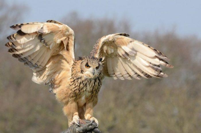 Do Owls Eat Prairie Dogs