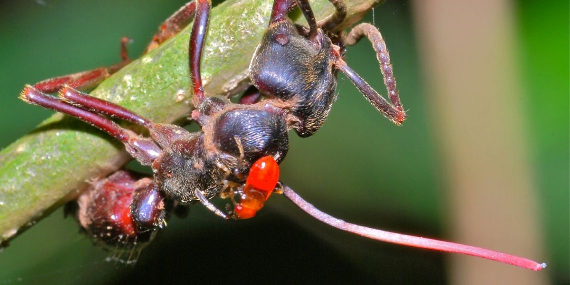"""Ant killed by fungus"" by Bernard DUPONT via Wikimedia Commons is licensed under the Creative Commons Attribution-Share Alike 2.0 Generic license"