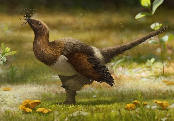 The Silky Serikornis Sungei Fossil Gives A Glimpse Into The Evolution Of Feathers