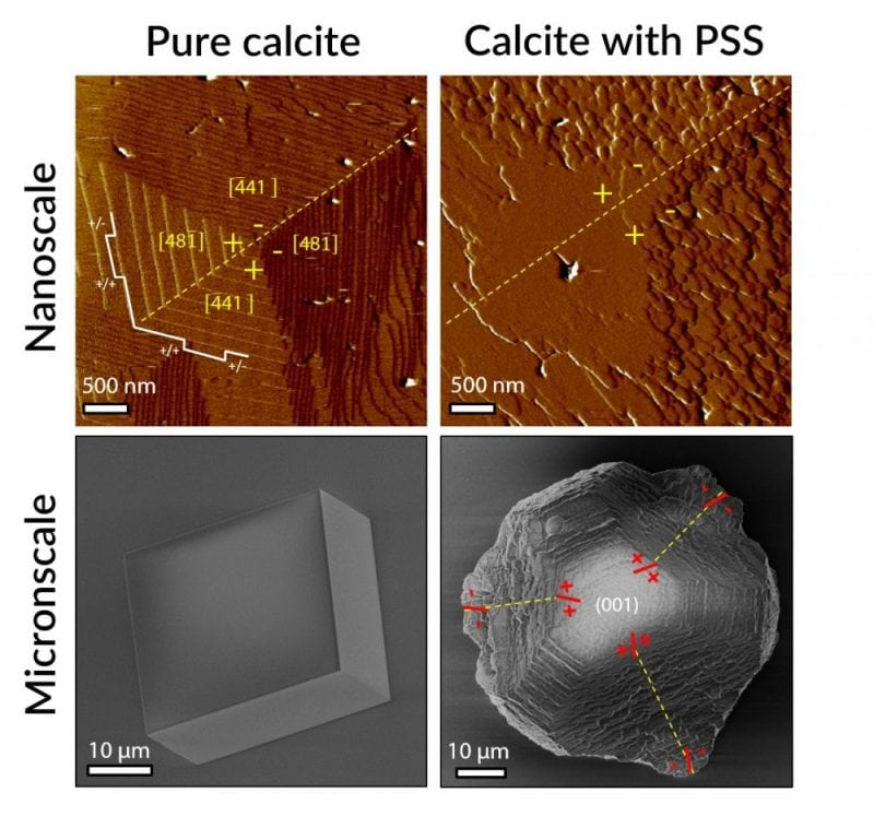 """The first mechanistic picture is presented of the process by which crystals develop exotic morphologies previously attributed to """"mesocrystals."""" The canonical mesocrystal of calcite grown in polystyrene sulfonate solution forms through completely classical processes of step advancement on faceted crystal surfaces, putting to rest the notion that a typical mesocrystal morphology is evidence for a growth pathway via particle assembly.  Credit: Paul J. M. Smeets, Kang Rae Cho, Nico A. J. M. Sommerdijk and James J. De Yoreo: A Mesocrystal-Like Morphology Formed by Classical Polymer-Mediated Crystal Growth. Advanced Functional Materials. 2017. 27. 1701658. Copyright Wiley-VCH Verlag GmbH & Co. KGaA. Reproduced with permission."""