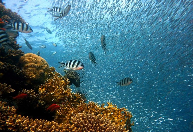 Coral reefs are one of the places that biomagnification affects because of cyanide accumulation. Credit: Pixabay