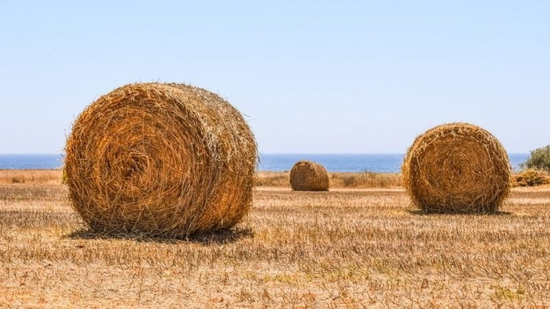 Hay can be a useful source of bioenergy (Credit: Pixabay)