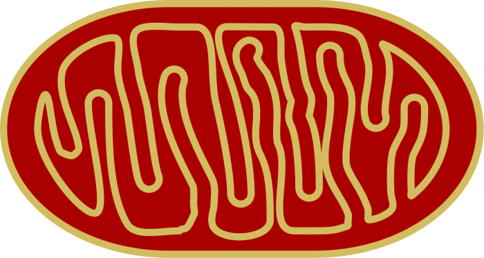 Image https://en.m.wikipedia.org/wiki/File:Mitochondria.svg by Nevit via Wikimedia Commons is licensed under CC-BY-SA 3.0 https://creativecommons.org/licenses/by-sa/3.0/deed.en