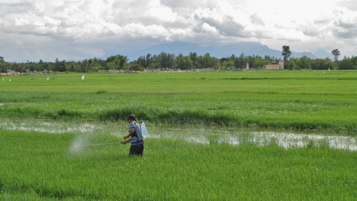 """""""Viet Nam, Quảng Nam, Hội An - spraying pesticide on rice"""" https://www.flickr.com/photos/garycycles8/9789207033 by garycycles8 (via Flickr) is licensed under CC BY 2.0 https://creativecommons.org/licenses/by/2.0/"""
