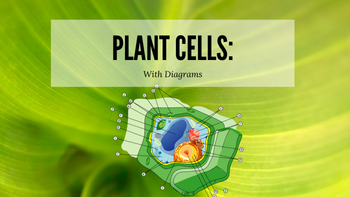 Plant Cell Diagram | Science Trends