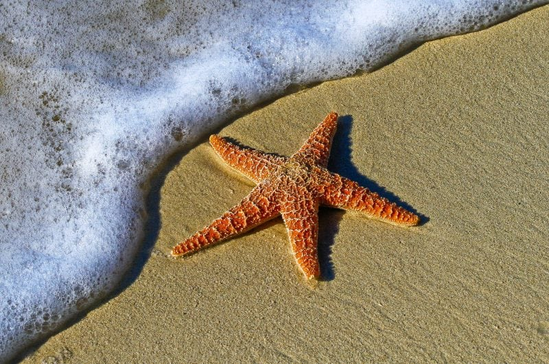 Starfish are among those that were killed in large numbers due to the freezing weather. Credit: Pixabay