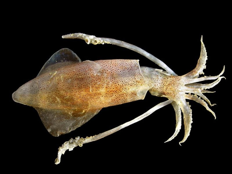 Phylum Mollusca (Mollusks): With Examples   Science Trends