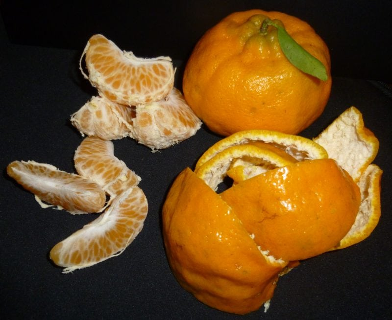 Ponkan Fruit. Credit: Carmen Lúcia de Oliveira Petkowicz