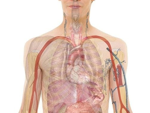 Body Organs Maps And Diagrams Science Trends