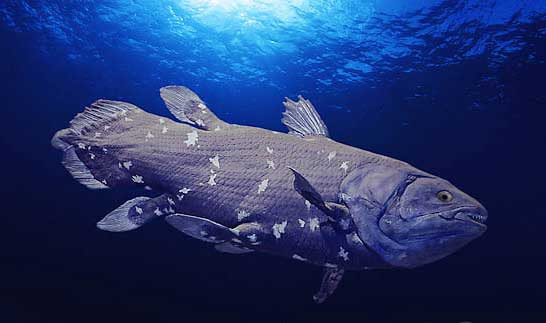 Coelacanth. Image source: Wikimedia Commons.