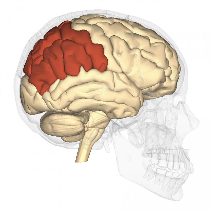 Parietal Lobe Function | Science Trends