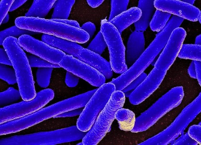 eubacteria examples | science trends