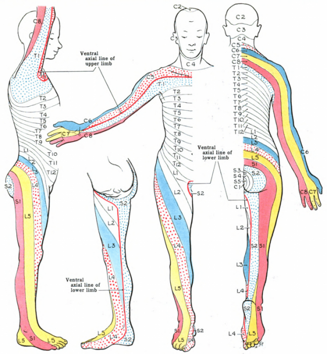 List Of Human Body Parts Names | Science Trends