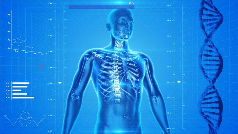 List Of Human Body Parts Names Science Trends