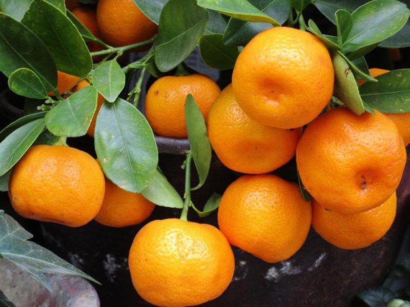 Mandarin. Credit: Pixabay