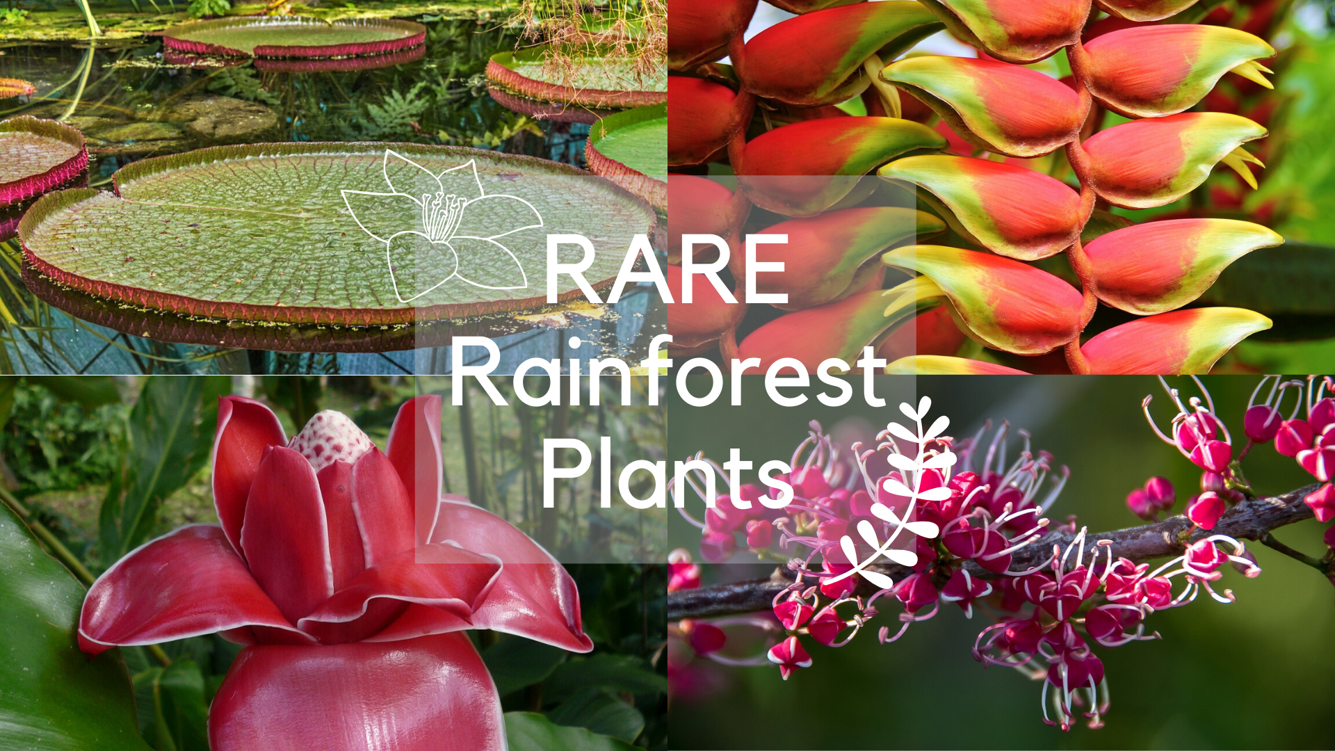 Tropical Rainforest Plants: From Rare To Common | Science Trends