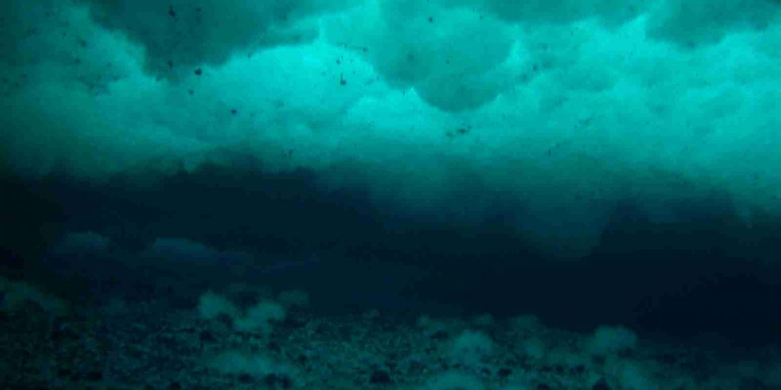 Anchor ice under sea ice. Credit: Wikimedia Commons