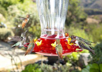 Credit: Scott M. Logan, Wild Wings Ecology