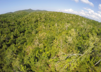 Fig 1: Trees affected by Hurricane Patricia. Image credit: Jose Israel Flores Puerto, with the help of an UAV.
