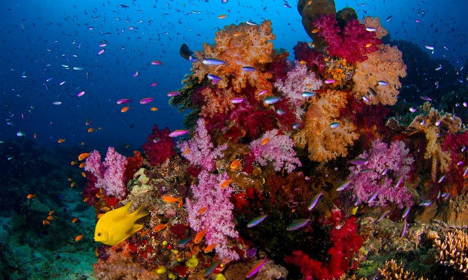 Fig. 1 – Reef fish species packing at Taveuni, Fiji (Photo: J.P. Krajewski).
