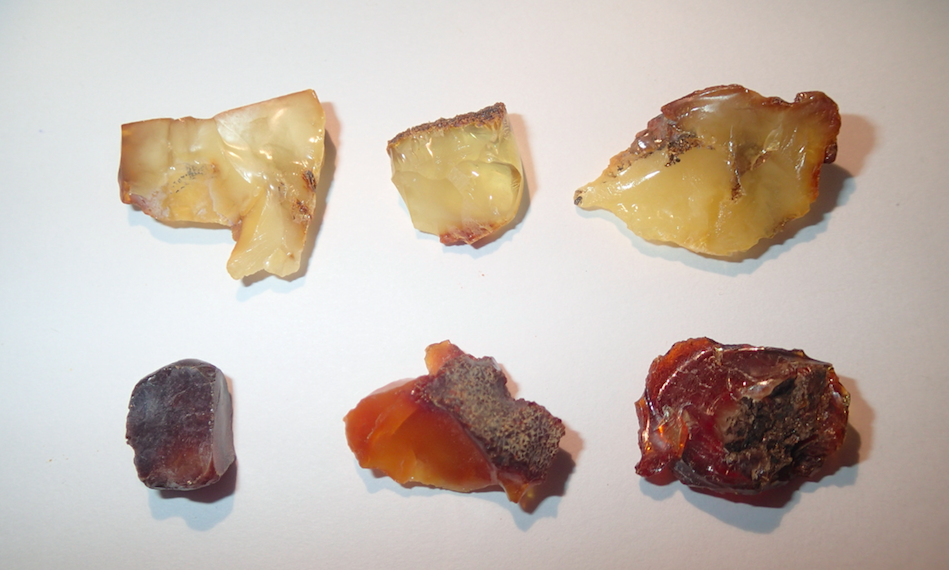 Natural amber nuggets from the Rovno deposit, western Ukraine. Photo courtesy of Ryan C. McKellar.