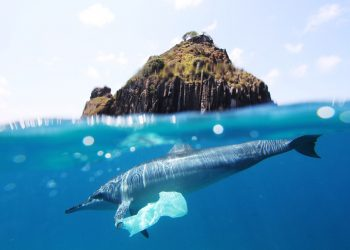 """dolphin plastic bag at fernando de noronha"" by Jedimentat44 via Flickr, is licensed under CC BY 2.0"