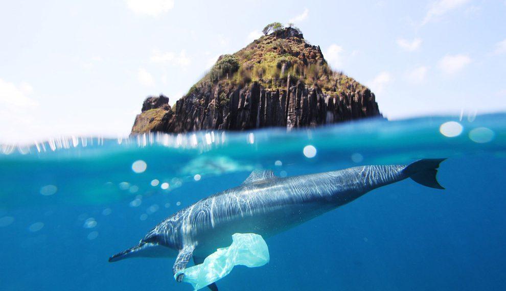 """dolphin plastic bag at fernando de noronha"" by Jedimentat44 via Flickr, is licensed under CC BY 2.0"