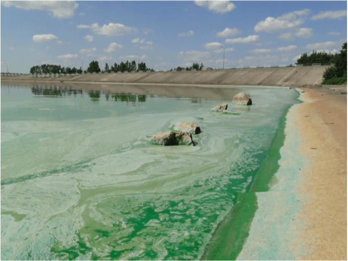 Fig. 1 The Sulejów reservoir during cyanobacterial bloom occurrence. Credit: Katarzyna Izydorczyk.